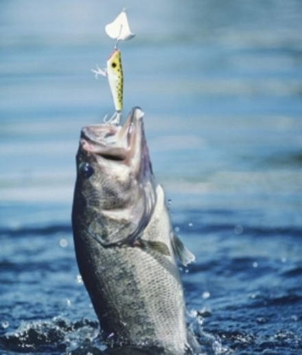 Southeast Area Lakes Fishing Report for Oct 25th