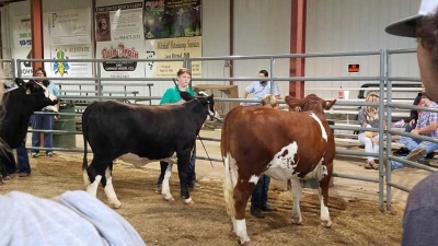 Leflore County FALL FAIR 2020 Livestock Exhibits