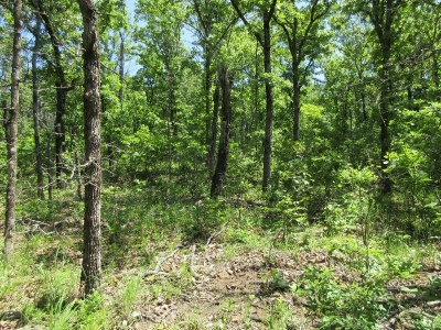 An oak/hickory managed with late summer fire. The site was initially thinned using herbicide and was burned in September two years prior to this photo. Notice the abundant understory vegetation, much of which is preferred food for white-tailed deer.