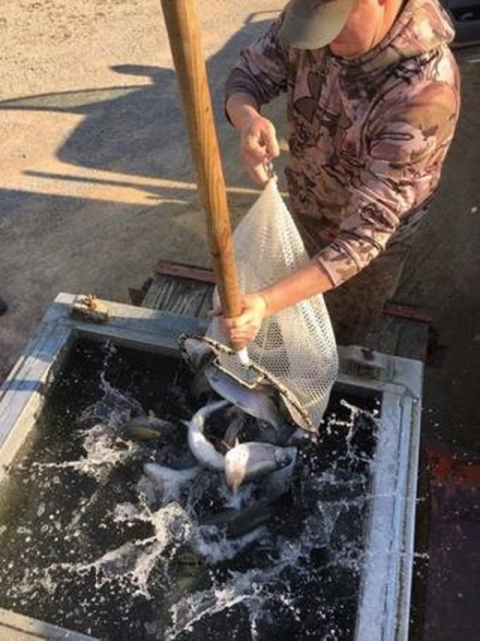 The last trout stocking of the 2018/19 trout season occurred at the Blue River Public Fishing and Hunting Area on Tuesday, March 19. Approximately 3,000 trout were stocked in all areas except the catch and release zone. Spend you spring break reeling in trout with family on the Blue River.