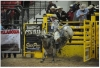 Champion bull rider Julius Y. Begay busts the chute and hopes to hang on for 8 seconds