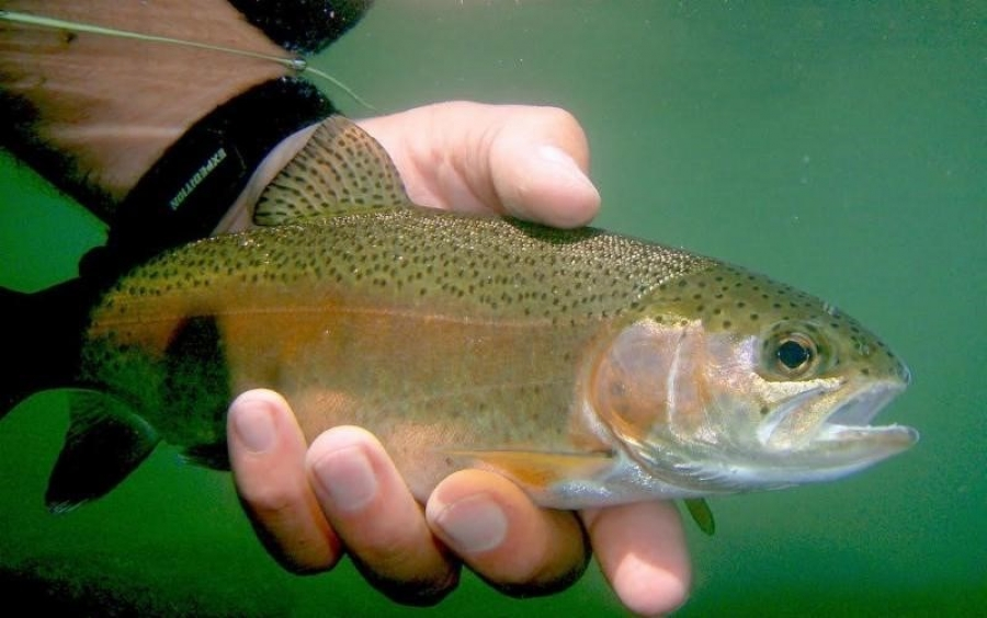 SOUTHEAST AREA LAKES FISHING REPORT FOR AUG 4