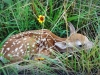 """Avoid Interfering With Young Wildlife; """"Help"""" Usually Hurts"""